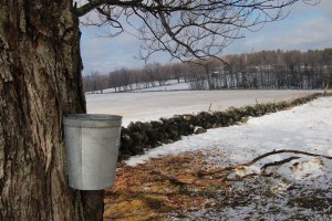 maple-sugar-buckets-1324316